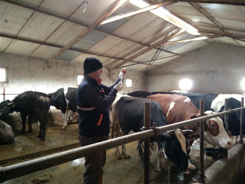 Bolu'da Şap Hastalığı İle Mücadelenin İlkbahar Etabı Başladı