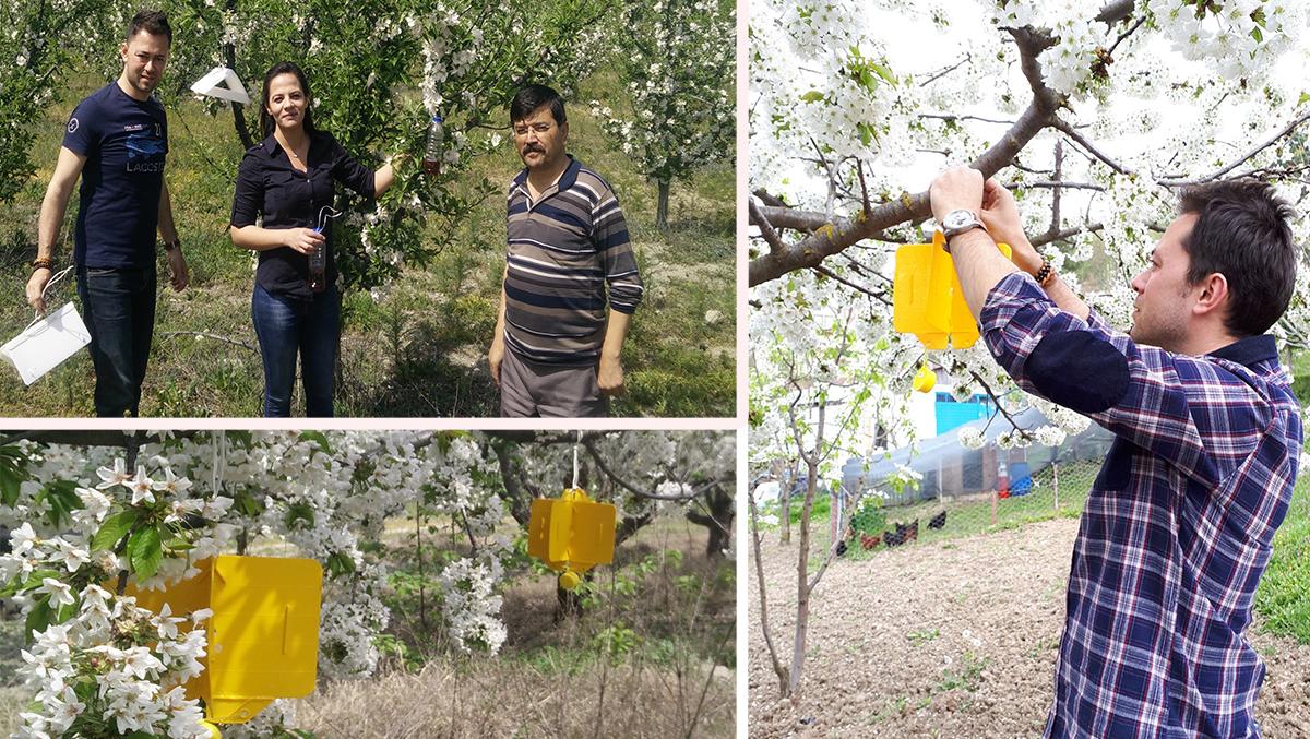 Bolu'da Meyve Ağaçlarında Feromon Tuzakları Yerini Alıyor